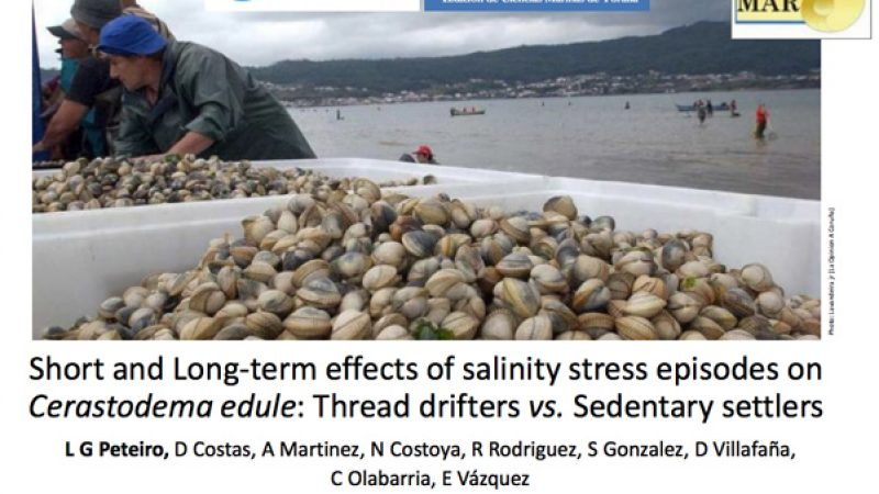 short-and-long-term-effects-of-salinity-stress-episodes-on-cerastodema-edule-thread-drifters-vs.-sedentary-settlers